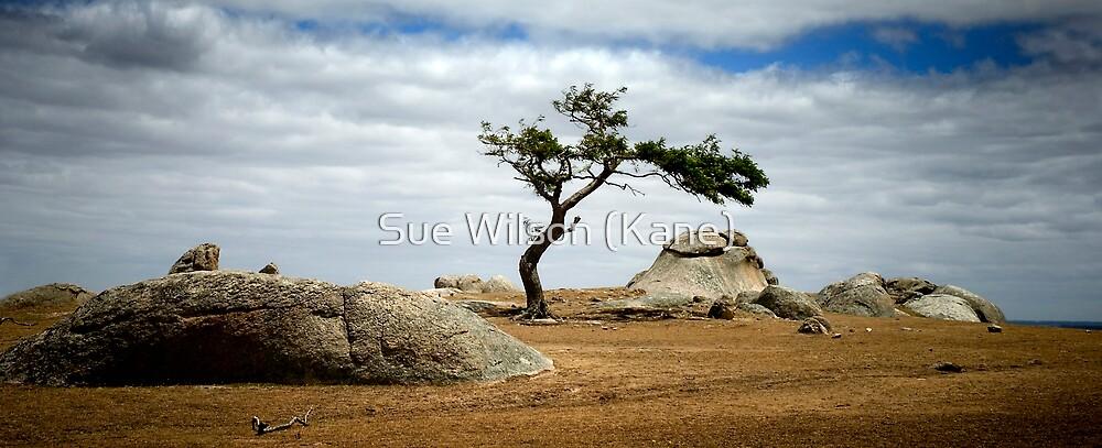 Dog Rocks by Sue Wilson (Kane)