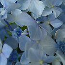 Blue Pleasure by FABART