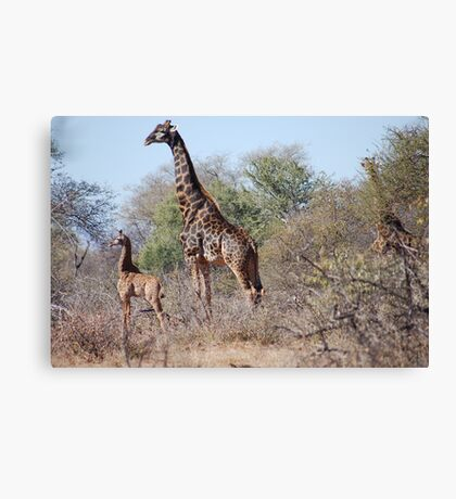 A PROUD MOTHER in the Wild Canvas Print