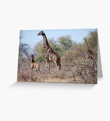 A PROUD MOTHER in the Wild Greeting Card