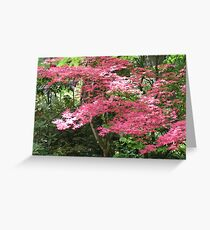 Would you believe . . . a pink maple?! Greeting Card
