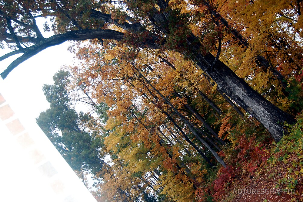 The angle of fall by N8TURESGRAFFITI