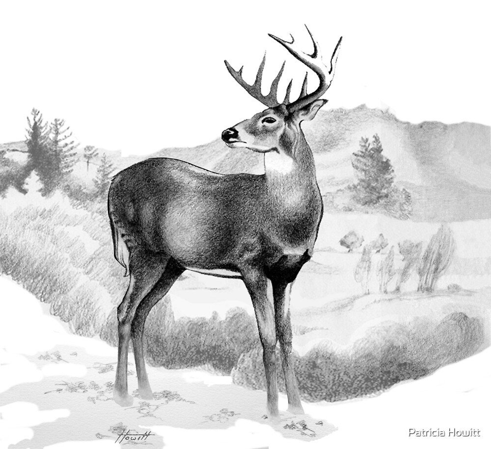 White-tail Stag Sniffing the Air by Patricia Howitt
