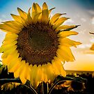 The Big Sunflower by Linda Storm