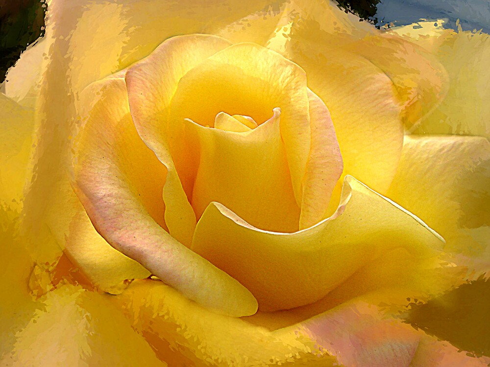Yellow Rose by the Liquor Store by Liz Wear
