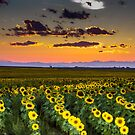 Mountain view for sunflowers by Linda Storm