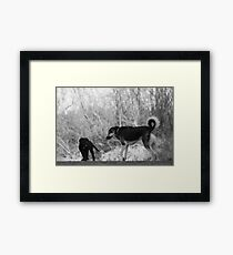 Meeting at the Dog Park Framed Print