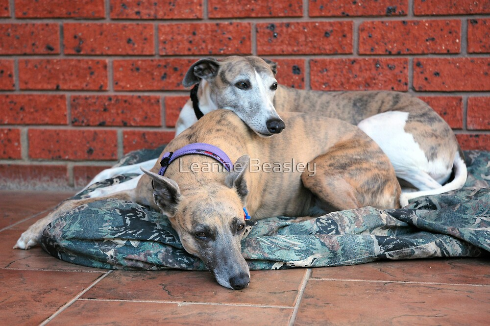 m&d Cleo & Connor November by Leanne Beasley