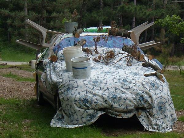 I Covered My Car by jeannie812