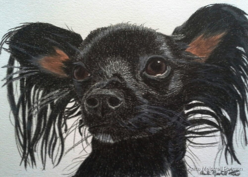 Dolly - Chihuahua/Dachshund Mix Commission by Anita Putman