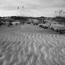 Beach in Black and White by Susan Gottberg