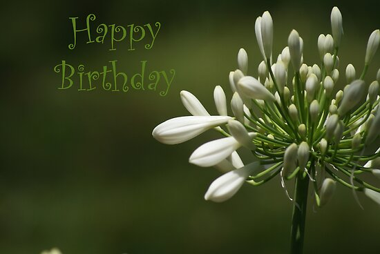 Feliz cumpleaños, Luisa Balucani ¡!! Flat,550x550,075,f