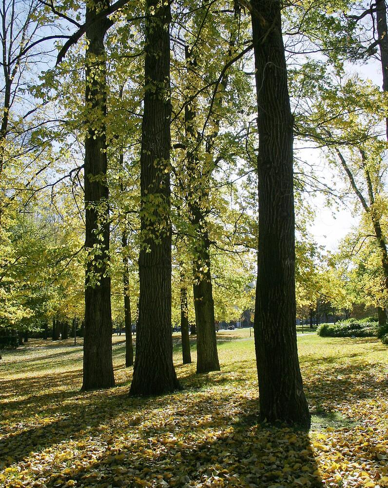 Glebe Park by HowieFarkes