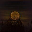 Dark Moon by Linda Storm
