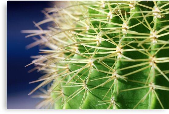 Spiky by Freelancer