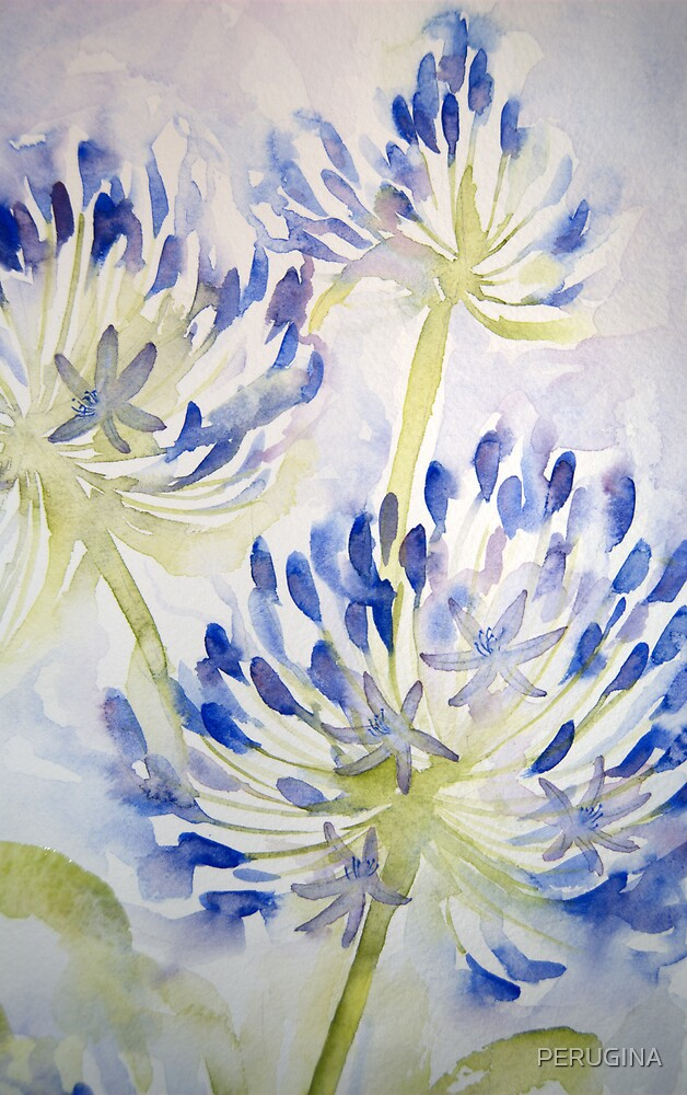 agapathus 'for the love of flowers' © 2007 patricia vannucci  by PERUGINA