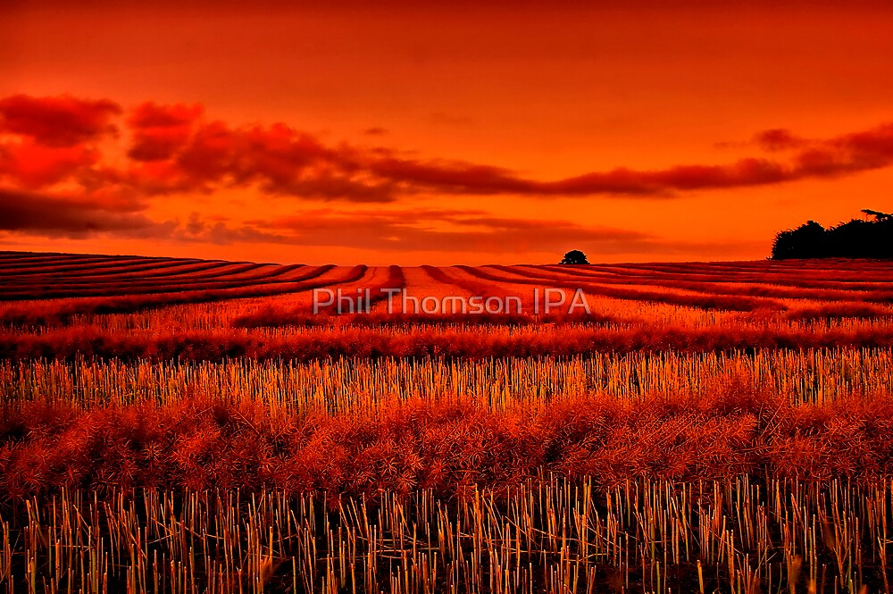 """""""Morning!! - After The Harvest"""" by Phil Thomson IPA"""