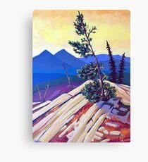 Pines on Kootenay Pass Canvas Print