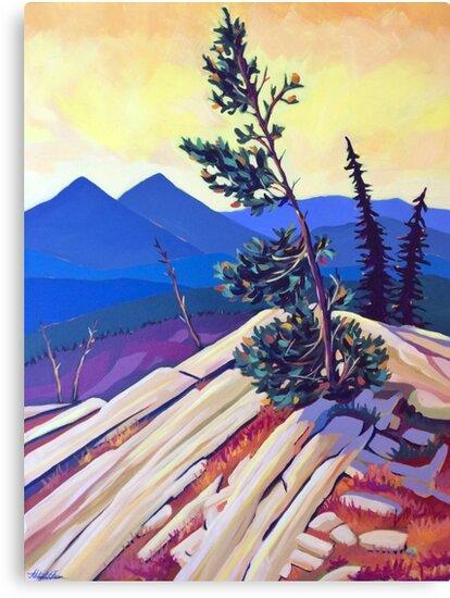Pines on Kootenay Pass by Abby Wilson