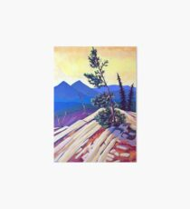 Pines on Kootenay Pass Art Board