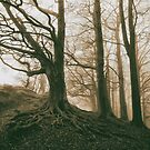 Winter Woods by Maybrick