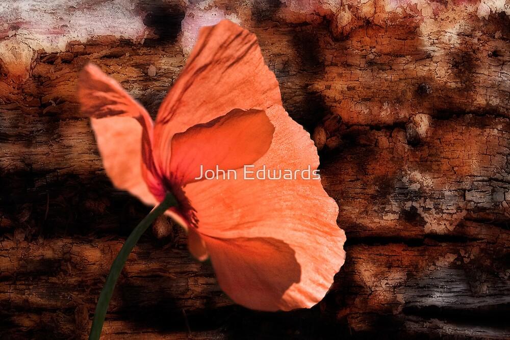 Pavot rouge by John Edwards