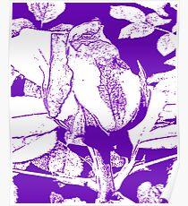 Purple rosebud Poster