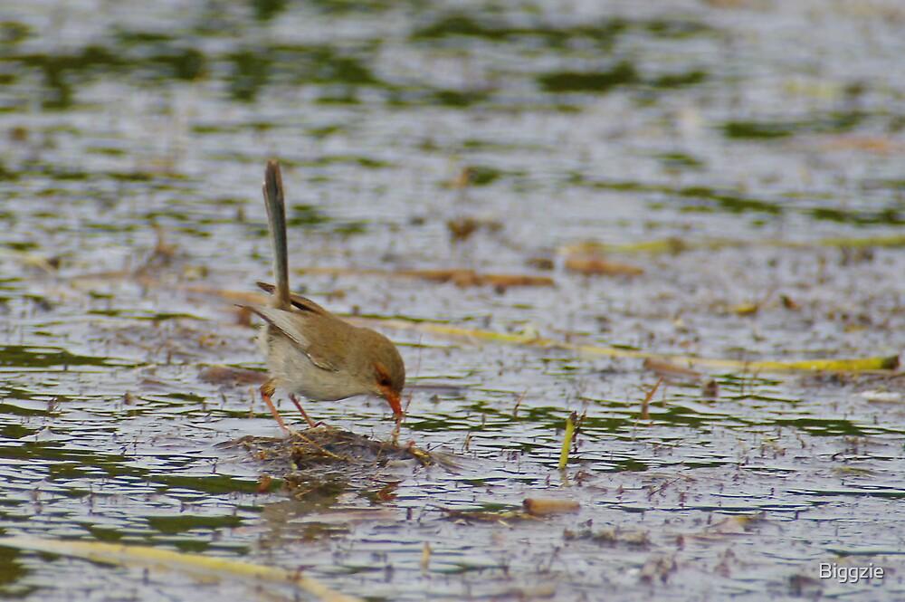 Lake Edward Wrens by Biggzie