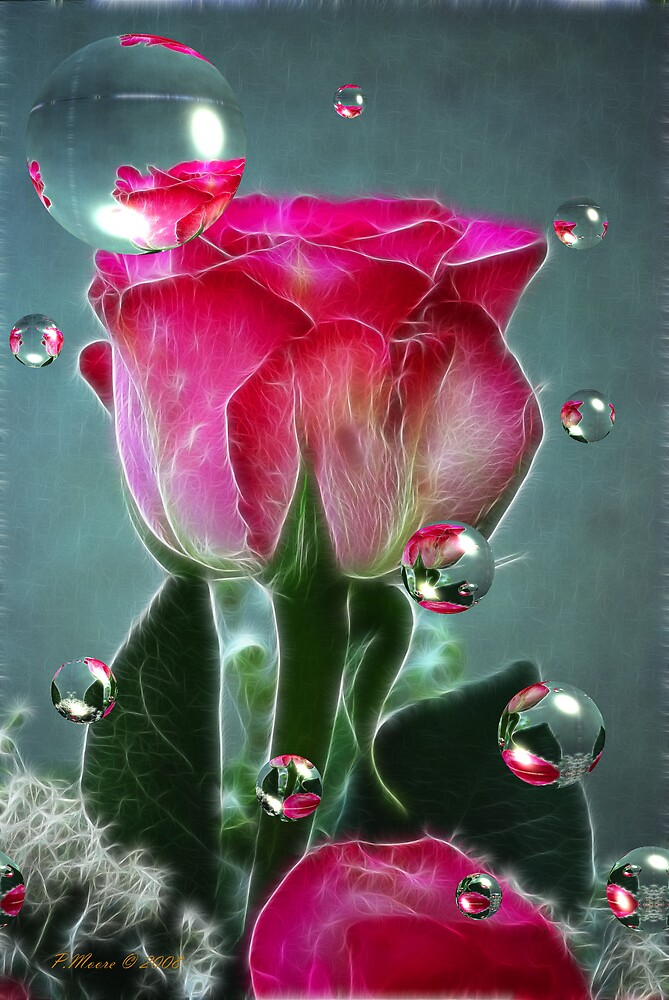 A Rose for Melisa by Pat Moore