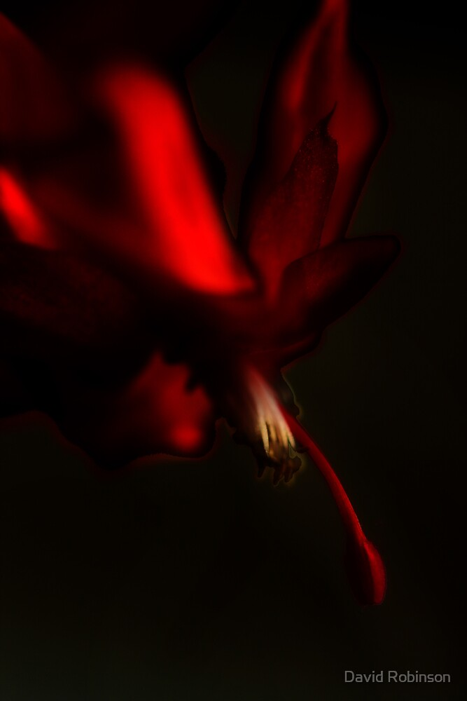 Pretty in red by David Robinson