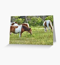 Assateauge Wild Horses 5 Greeting Card