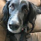 Curious Black Dog by silverdragon