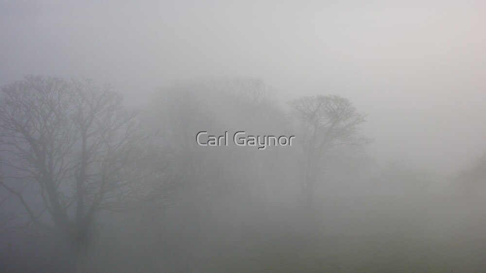 Transitional State  by Carl Gaynor