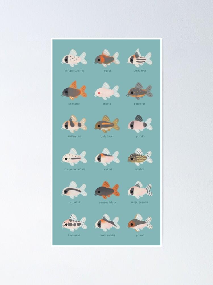 Alternate view of Corydoras! Poster