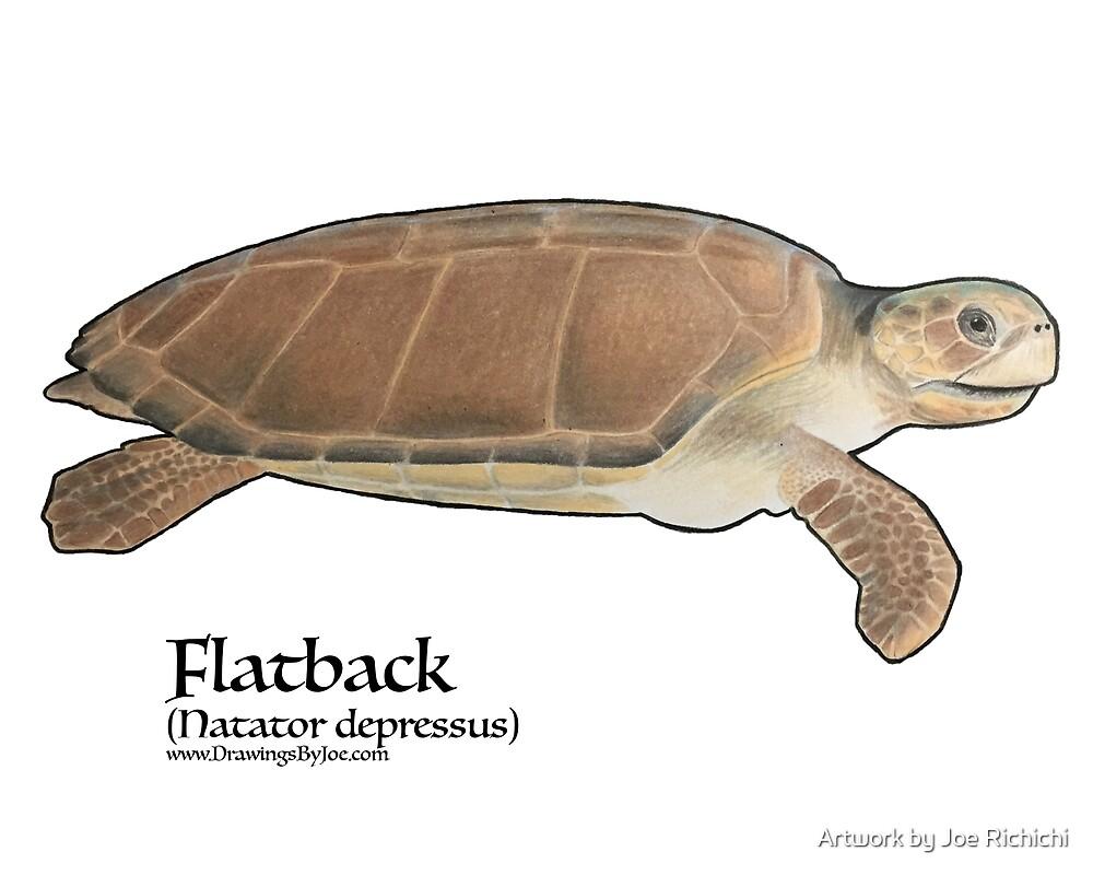 FlatBack Sea Turtle by Artwork by Joe Richichi