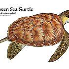 Green Sea Turtle by Artwork by Joe Richichi