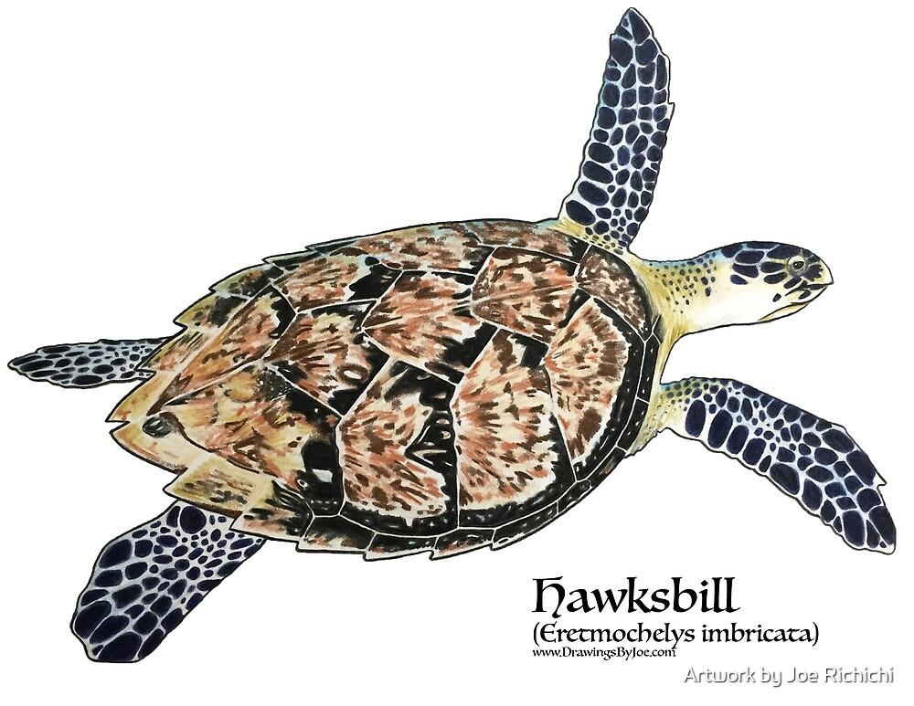 Hawksbill Sea Turtle by Joe Richichi