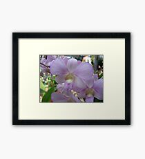 Lovely in Lavender Framed Print
