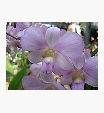Lovely in Lavender Photographic Print