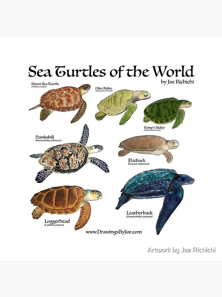 Meeresschildkröten der Welt von Artworkbyjoe
