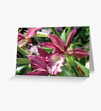 A Dendrobium with a Sharp Little Face Greeting Card
