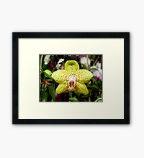 Ever see an orchid snarl? Framed Print
