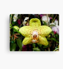 Ever see an orchid snarl? Canvas Print