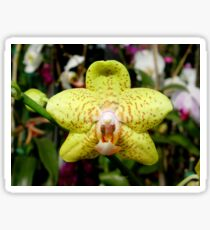Ever see an orchid snarl? Sticker