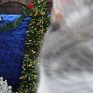 Silly Cat by danabee