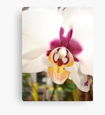 All Orchids have Faces Canvas Print
