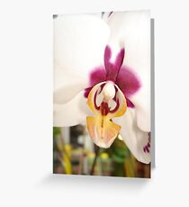 All Orchids have Faces Greeting Card