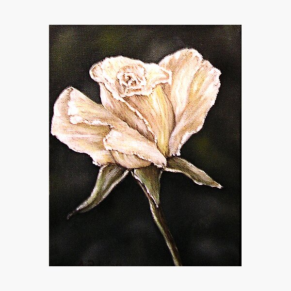 """""""White Rose"""" - Oil Painting Photographic Print"""
