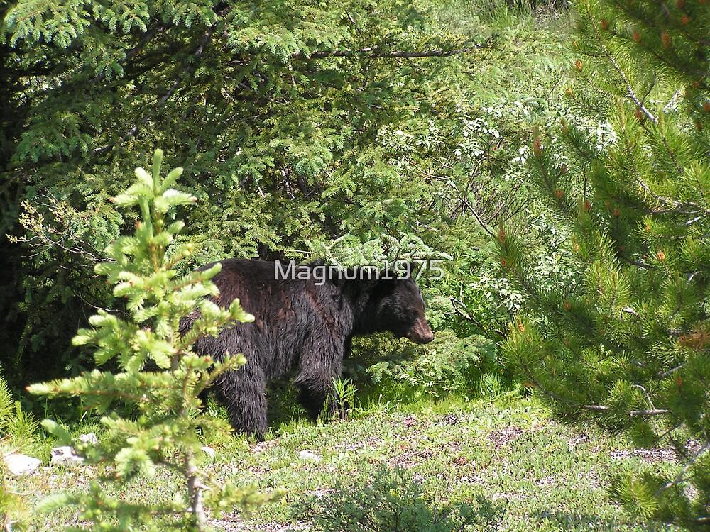 Black Bear by Magnum1975