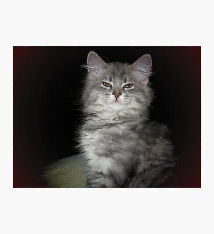 Princess Cat Photographic Print